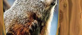 SAD:  Prognostičar Phil  najavio brzi dolazak proljeća