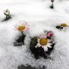 Proljetna ravnodnevnica: Kalendarsko proljeće počinje u zimskom ugođaju