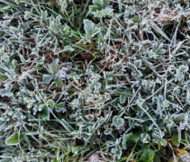 Sinj, Gradište: Rekordno hladno rujansko jutro
