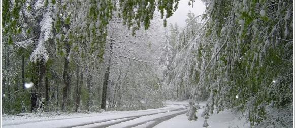 """Vremeplov: Zima u svibnju i """"Ledeni sveci"""""""
