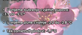 Toplina probudila prirodu, mraz prijeti: Koje temperature voćke mogu izdržati?