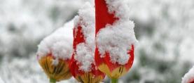 Svibanjski ledeni sveci: Kada svibanj iznenadi snijegom i ledom