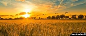 Kako ugljikov dioksid djeluje na usjeve?
