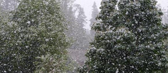 Estonija: Nakon rekordnih vrućina u svibnju, snijeg u lipnju