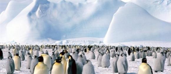 Antarktika: Rekordna površina  leda
