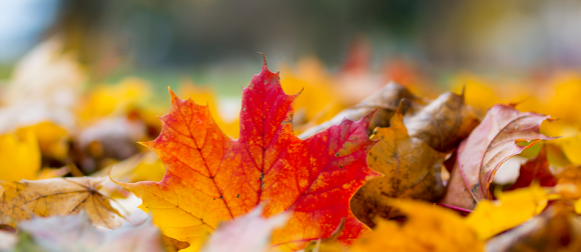 Prvi tjedan klimatološke zime: jugo, pljuskovi, zatim bura, a zima samo u višem gorju!