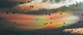 Pogledajte prekrasne iridescentne oblake iznad Podravine (FOTO)