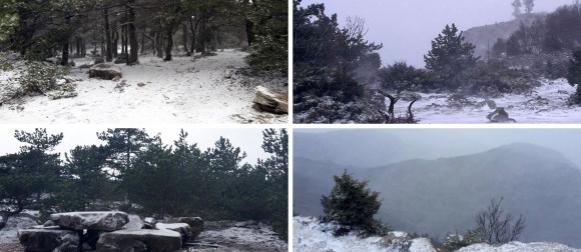 Rea vratila zimu u Dalmaciji: Zabijelio se Brač (FOTO)