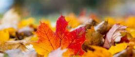 Tjedna prognoza: Jesen stiže, dunjo moja