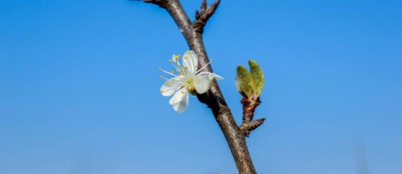 Prije zimske ciklone još malo proljeća na kraju klimatološke jeseni