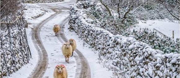 Crometeo Photo Contest: Snježni Cres donio Sandru Puncetu prvu pobjedu 2016. godine