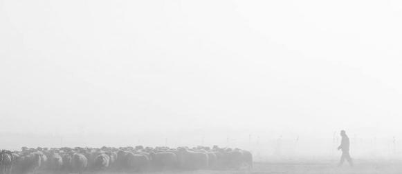 Crometeo Photo Contest: Sinjska magla i ovce Franu Jerkanu osigurali prvo zlato