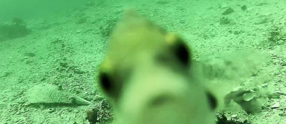Pratite svijet podmorja uživo: Podvodna kamera Martinska kod Šibenika