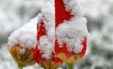 Kad svibanj iznenadi snijegom i ledom