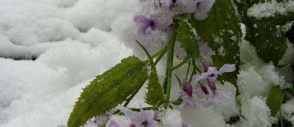 Proljeće na čekanju
