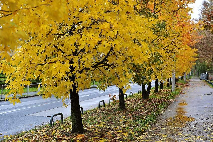 jesen_grad-081114.jpg