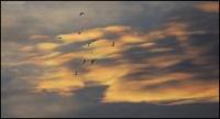 oblaci_03.jpg