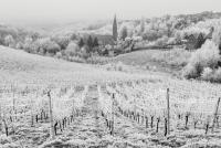 slika95_remetski vinogradi2312.png